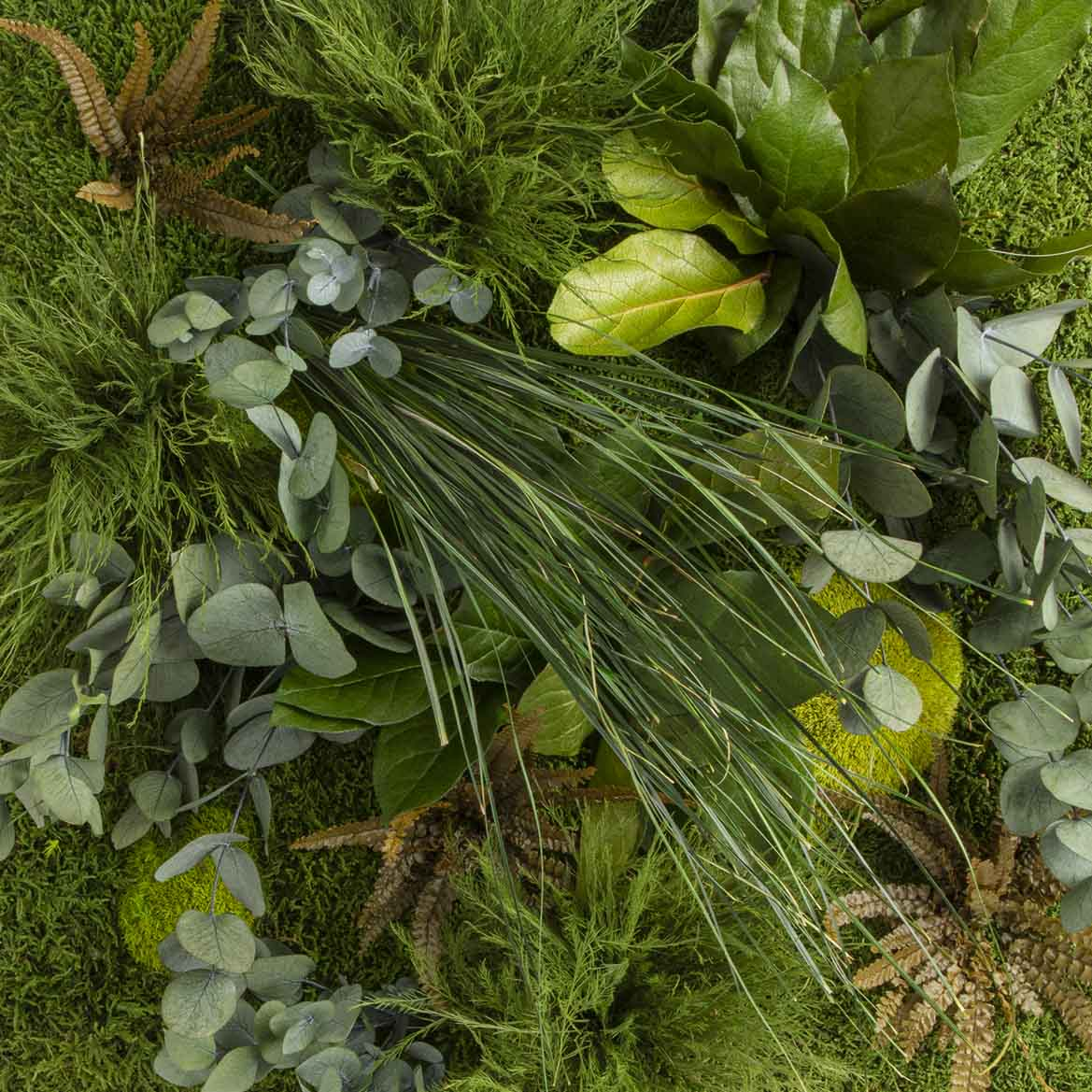 Moosbild mit Dschungelpflanzen