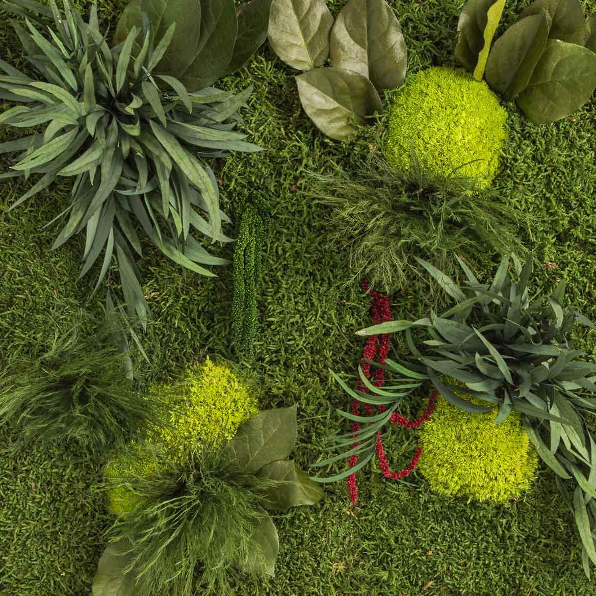Moosbild mit Pflanzen