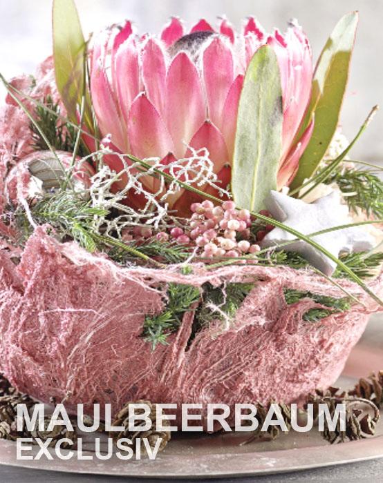 Maulbeerbaum Exklusiv