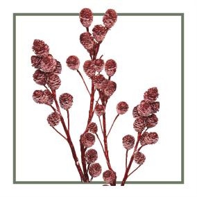 Gewachst Antik Rot