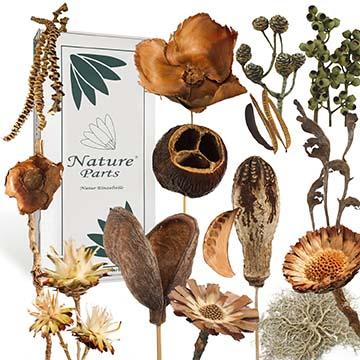 NatureParts® Boxenvielfalt Sortimente