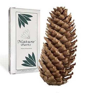 NatureParts® Boxenvielfalt Zapfen