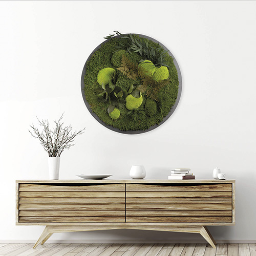 Moosbild & Pflanzenbild