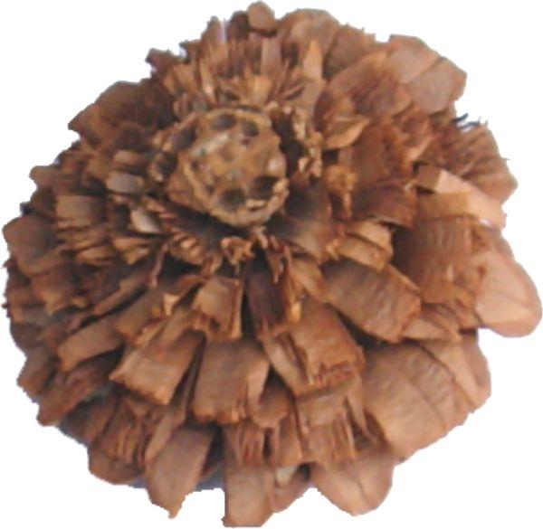 Rosenzapfen Natur (10 Stück)