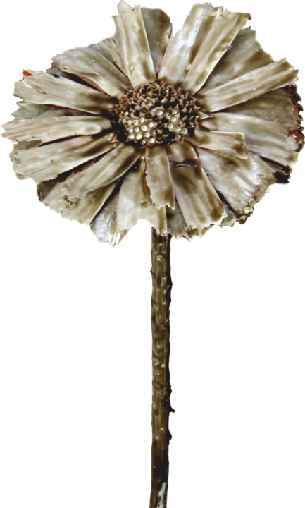 Protea geschnitten gewachst mocca grey (350 Stück)