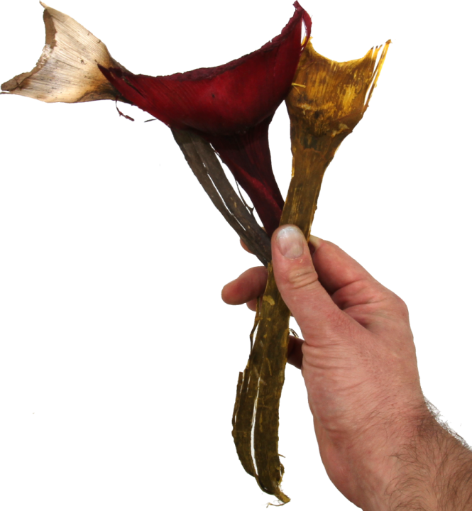 Agave klein im 3fach Farbmix     (800 Stück)
