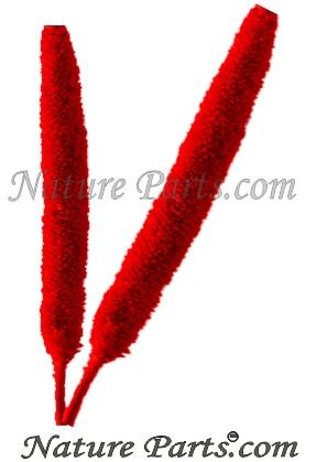 Babala Mit Stiel in Rot (500 Stück)