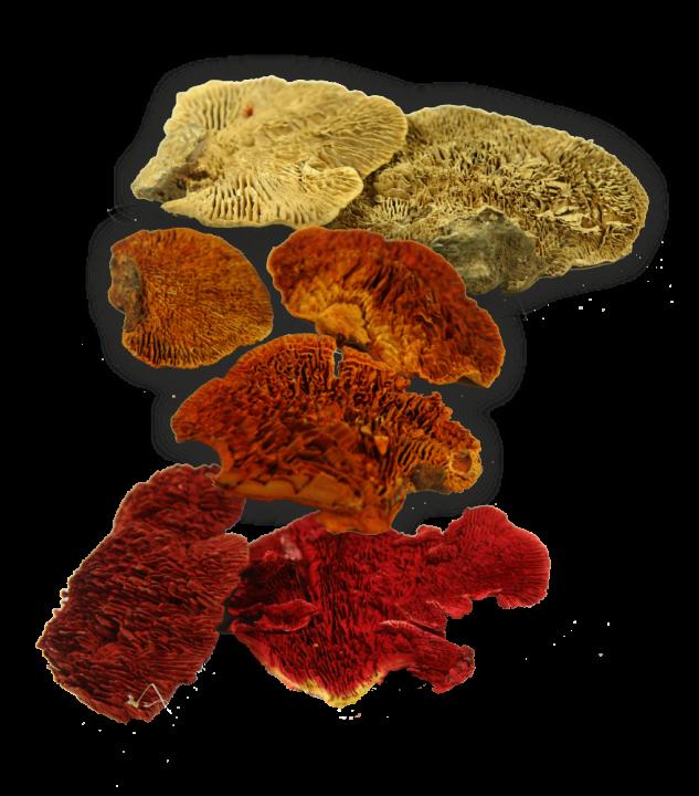 Baumschwamm lose im 3fach Farbmix   (10 Kg)