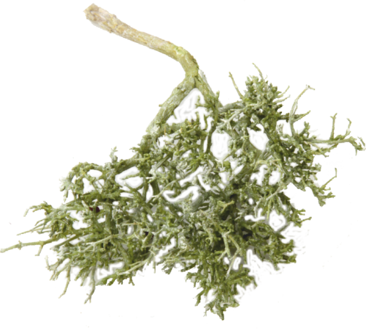 Dry Tree in Frosted Green (2 Kg)