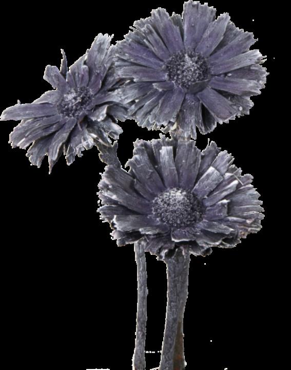 Compacta Rosette Medium (4-6cm) in Frosted Purple (600 Stück)