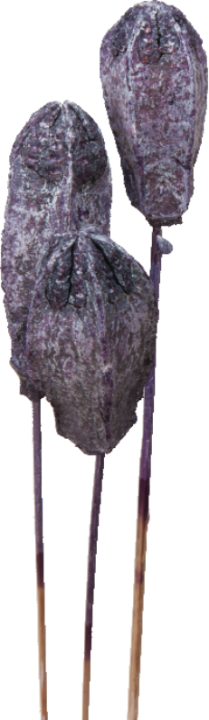 Mehogany am Stiel in Frosted Purple (500 Stück)