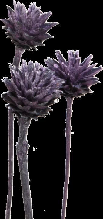Leukospernum mit Stiel in Frosted Purple   (600 Stück)