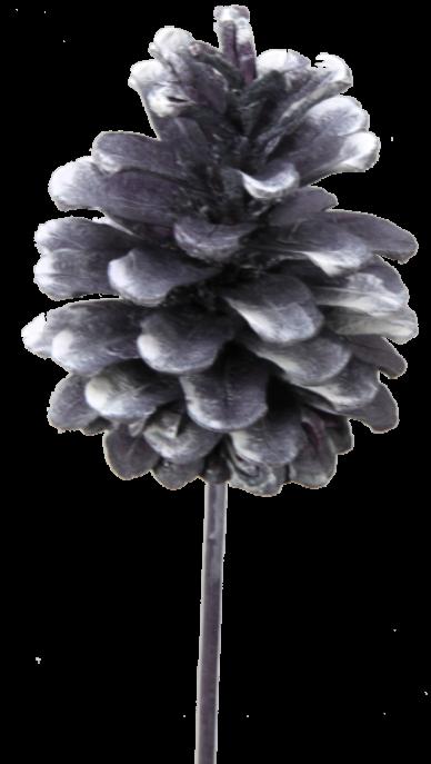 Schwarzkiefer Zapfen am Stab in Frosted Purple (240 Stück)
