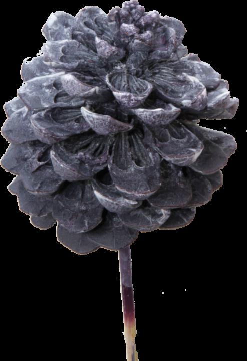 Pinea Zapfen am Stab in Frosted Purple (75 Stück)