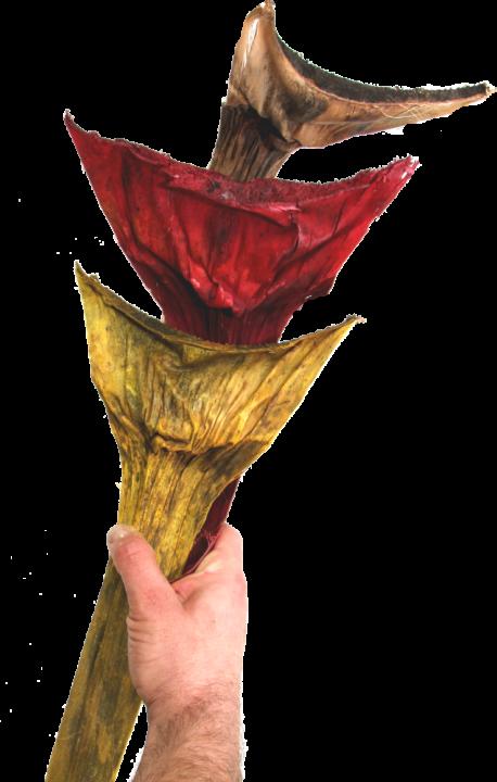 Agave groß in Rot gefärbt    (125 Stück)
