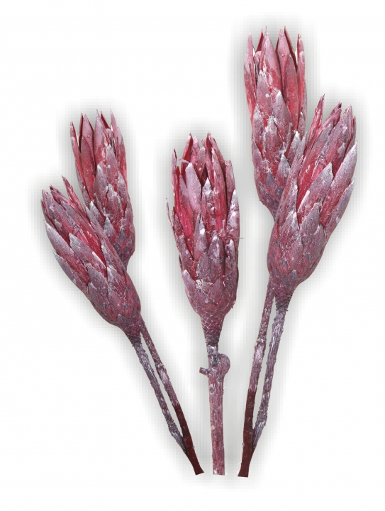 Protea Repens groß in Frosted Blackberry   (600 Stück)