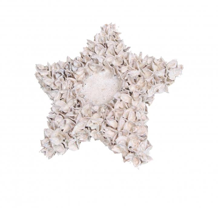 Baumwollfrucht Stern gewachst in Creme Weiß ( ca. 30cm ) (6 Stück)