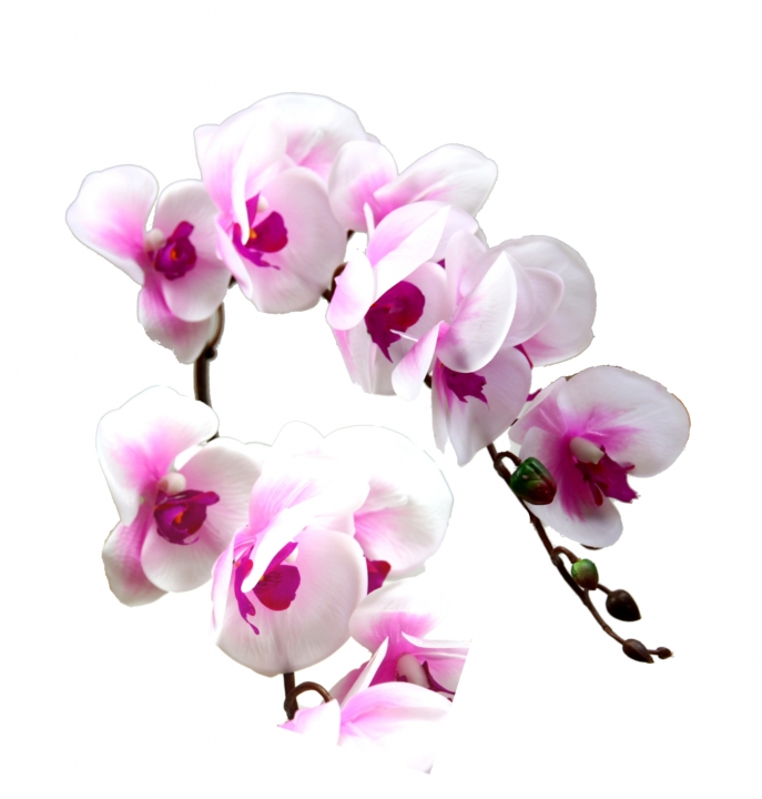 Orchideen Zweig gummiert in weiß / lila ( ca. 65cm ) (12 Stück)
