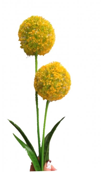 Allium (Zierlauch) mit Stiel in gelb ( Kopfgröße 10cm ) (12 St