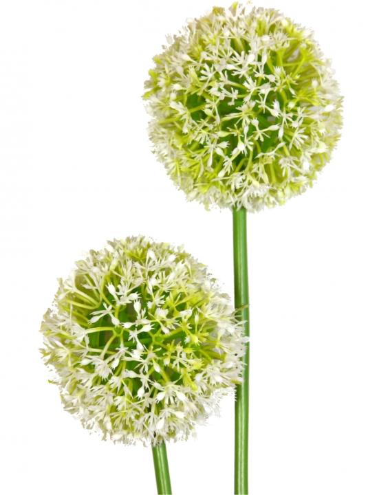 Allium (Zierlauch) mit Stiel in weiß ( Kopfgröße 10cm )
