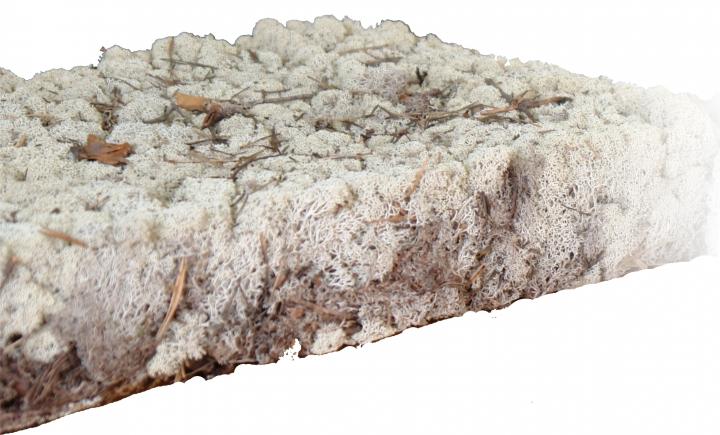 Finnischmoos Natur getrocknet ( 1 Lage -  40 x 60cm )