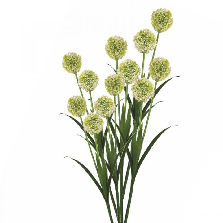 Allium / Zierlauch mit Stiel in Weiß ( Kopfgröße ca. 10cm ) (12 Stück)