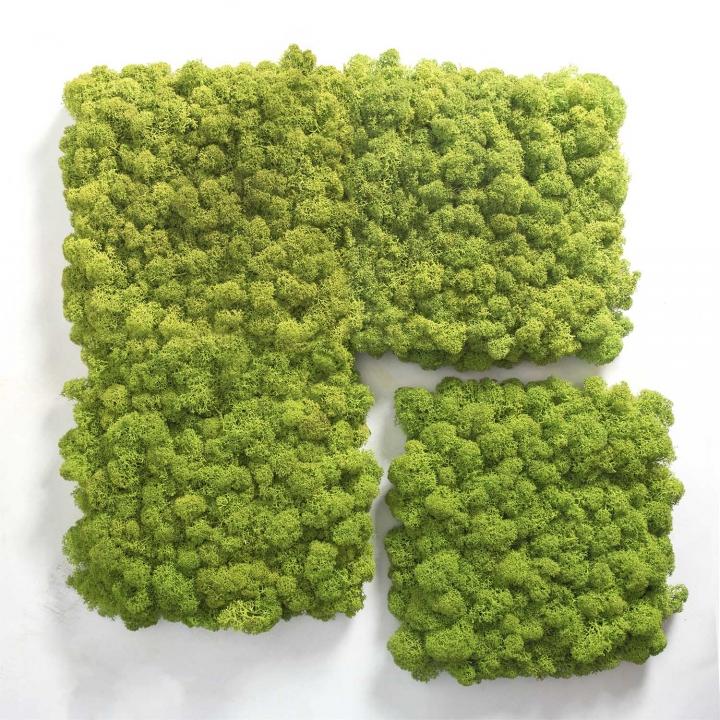 Moos•Moos Islandmoos Organic Moosbild ´Amalia´ in Königsblau – Moosplatte ( 25x25cm ) – einzigartiges Gefühl trifft auf besonderes haptisches Gefühl