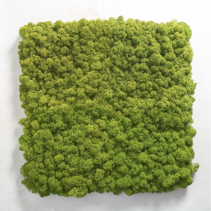 Moos•Moos Islandmoos Organic Moosbild ´Amalia´ in Persergrau – Moosplatte ( 25x25cm ) – einzigartiges Gefühl trifft auf besonderes haptisches Gefühl