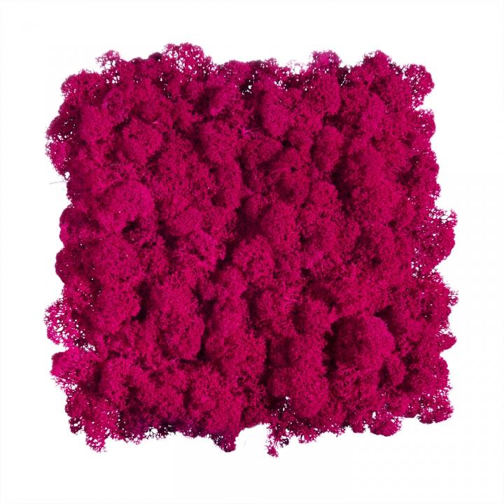Moos•Moos Islandmoos Organic Moosbild ´Amalia´ (25x25cm) in Flamingo – Moosplatte – einzigartiges Gefühl trifft auf besonderes haptisches Gefühl
