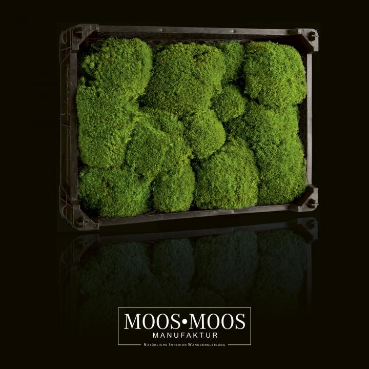 Kiste 40 x 30 x 12 cm - ca. 0,24m² Ballenmoos / Buckelmoos / Polstermoos präpariert in Apfelgrün