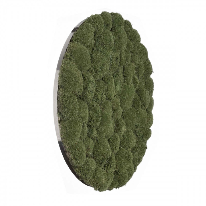 Moos•Moos Organic Rundbild aus `Ballenmoos´ präpariert in Moosgrün mit Edelstahlrahmen ( Ø 70cm )