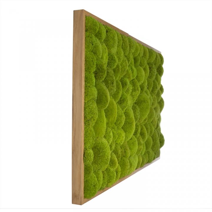 Moosbild Kugelmoos 100 x 60 cm mit Tischlerrahmen aus geölter Eiche
