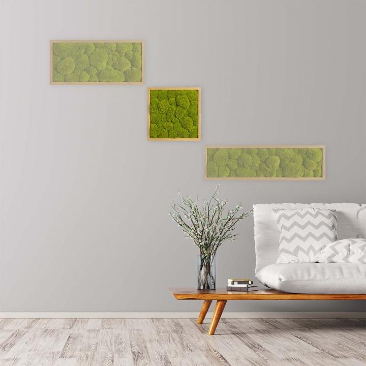 Moosbild Kugelmoos 35 x 35 cm mit Tischlerrahmen aus geölter Eiche