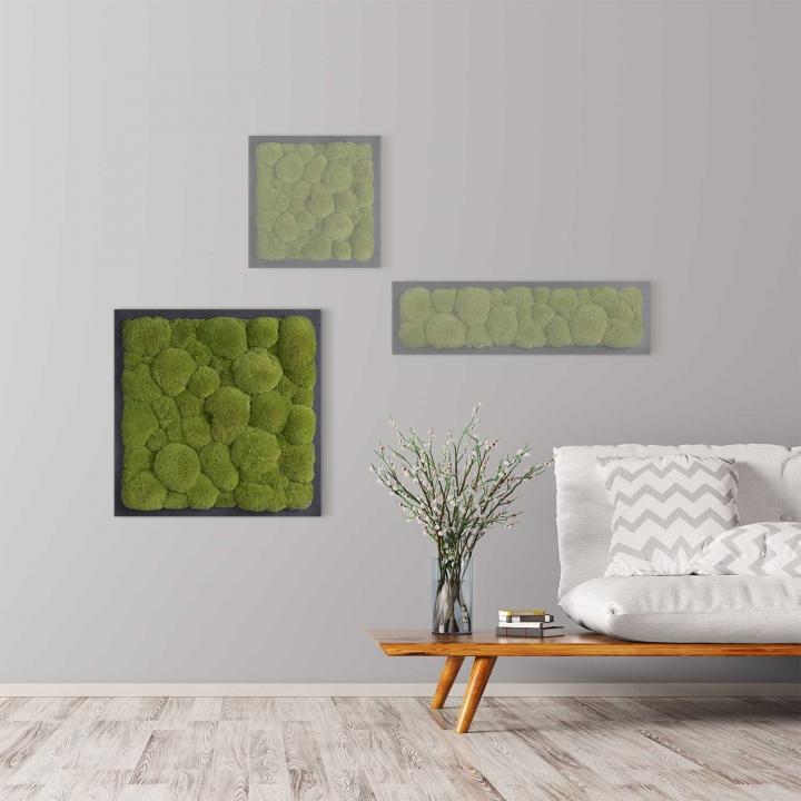 Moosbild Kugelmoos 55 x 55 cm auf Holzfaserplatte anthrazit
