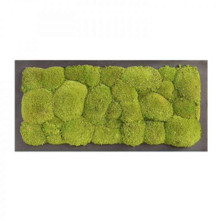Moosbild Kugelmoos 57 x 27 cm auf Holzfaserplatte anthrazit