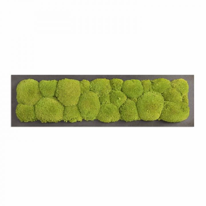 Moosbild Kugelmoos 70 x 20 cm auf Holzfaserplatte anthrazit