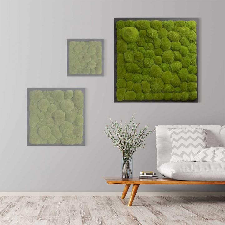 Moosbild Kugelmoos 80 x 80 cm auf Holzfaserplatte anthrazit