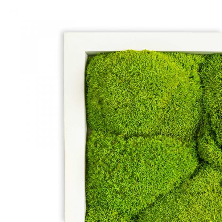 Moosbild Kugelmoos 55 x 55 cm mit weißem Tischlerrahmen