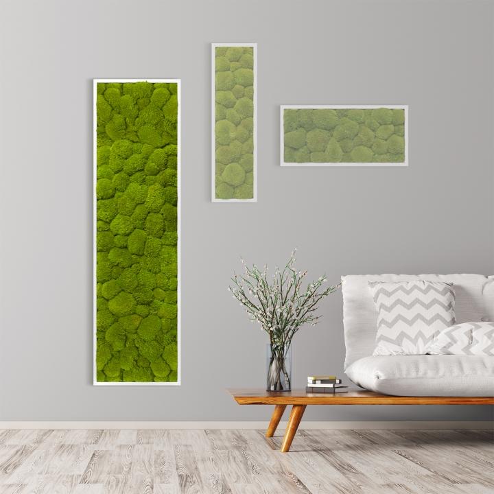 Moosbild Kugelmoos 140 x 40 cm mit weißem Tischlerrahmen