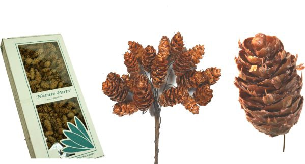 Douglas Zapfen am Draht gewachst Natur ( 100 Stück )