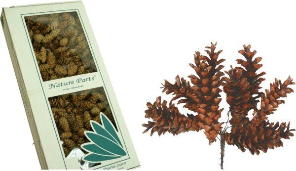 Weymouth Zapfen Natur am Draht gewachst (50 Stück)