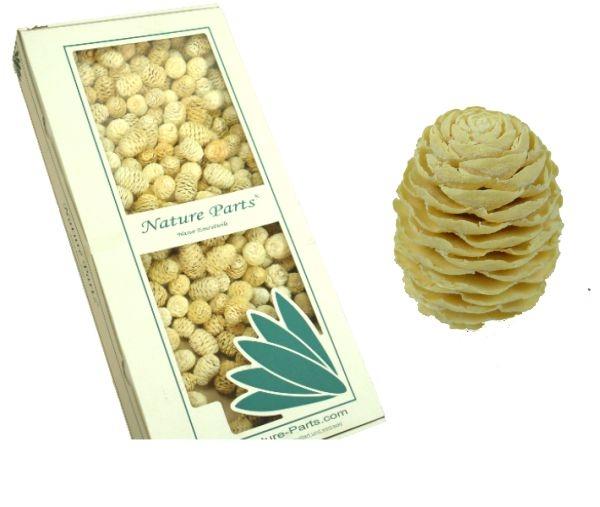 Sabulosum Zapfen Gebleicht ( Ø 4-5cm - 2kg )