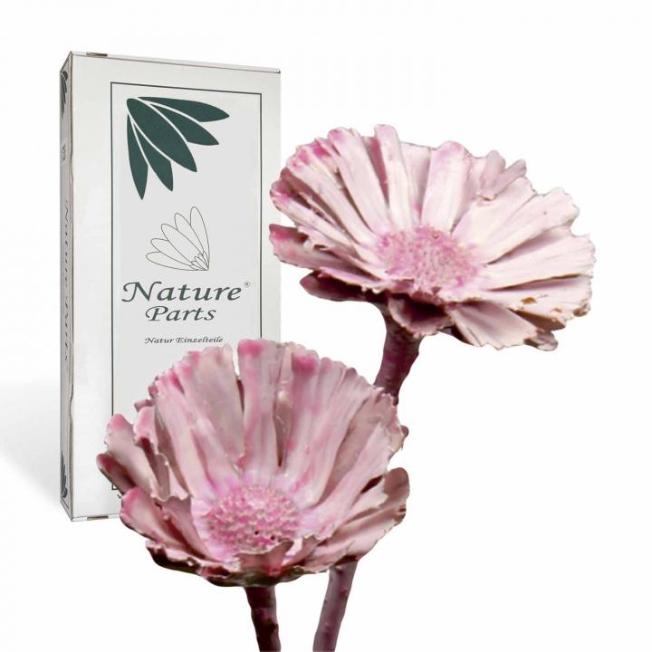 Protea geschnitten gewachst viola ice (40 Stück)