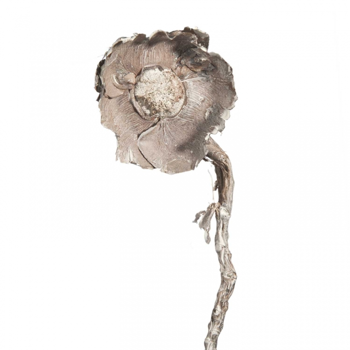 Coco Rose mit Stiel large in Stonewashed ( 96 Stück )