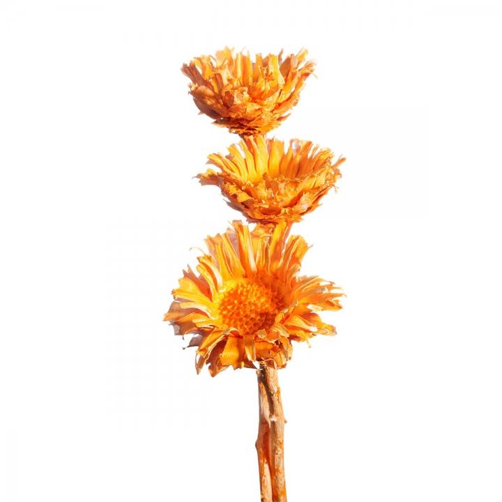 Sortiment Einzelteile in Orangespring ( 56 teilig )
