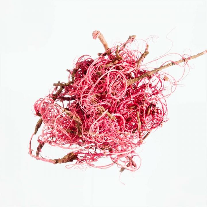 Curly Moos in Flamingospring ( 8kg ) (8 Stück)