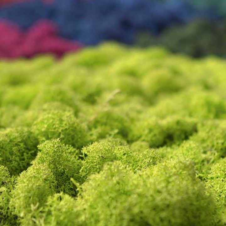 Moos•Moos Islandmoos Organic Moosbild ´Amalia´ in Moosgrün – Moosplatte ( 25x25cm ) – einzigartiges Gefühl trifft auf besonderes haptisches Gefühl