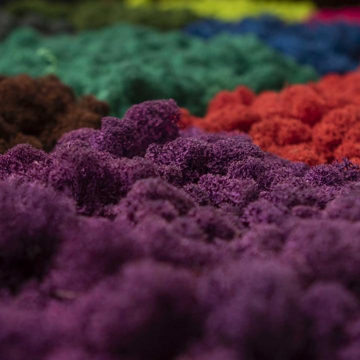Moos•Moos Islandmoos Organic Moosbild ´Amalia´ in Kaviar – Moosplatte ( 25x25cm ) – einzigartiges Gefühl trifft auf besonderes haptisches Gefühl