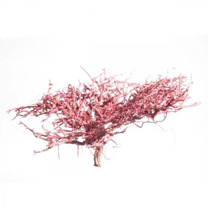 Dry Tree in Flamingospring