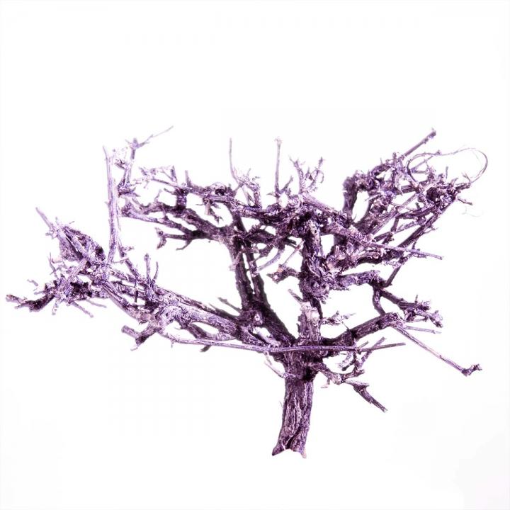 Dry Tree in Violettspring